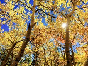 leaves-1363766_1280